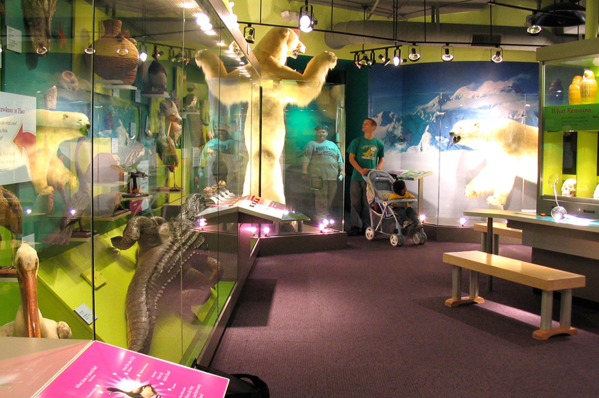 Discovery Center Museum Of Science And Natural History